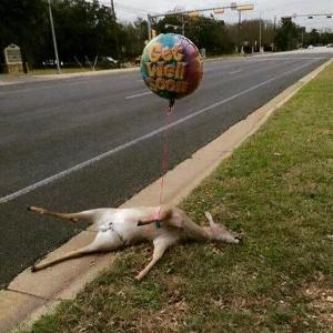 dead deer get well soon