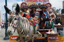 pull-zebras